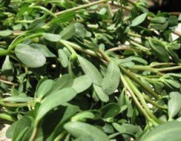 Keto Spanakopita - Old-fashioned Greek spinach pie 1