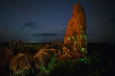 The-night-raider-©-Marcio-Cabral-Wildlife-Photographer-of-the-Year-800x534