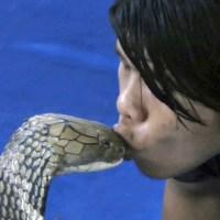 Νεαρός φίλησε στο στόμα βασιλική κόμπρα!!