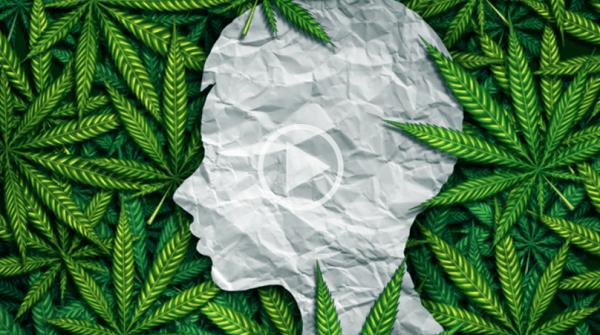 Endocannabinoid system 101