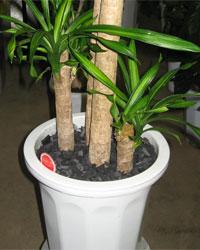 『竹炭』敷き詰完成品