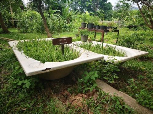 Baignoires recyclées dans le jardin biologique © The Tongsai Bay