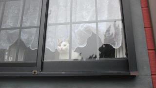 飾り窓の女ならぬ、飾り窓の猫