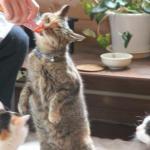 我が家のお客様は猫のオヤツ持参です