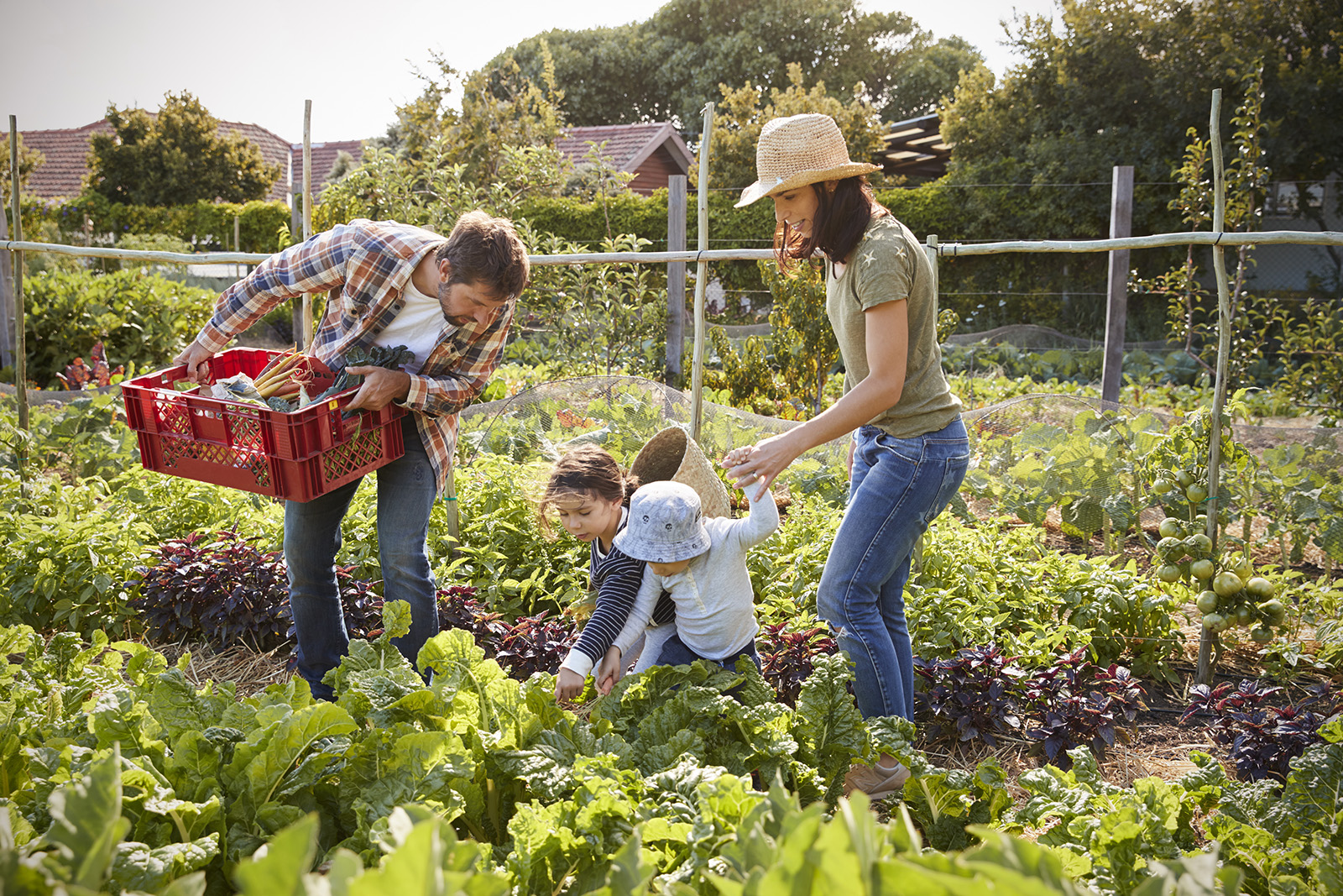 Climate Victory Garden Commitments | Green America on Gardening  id=96607