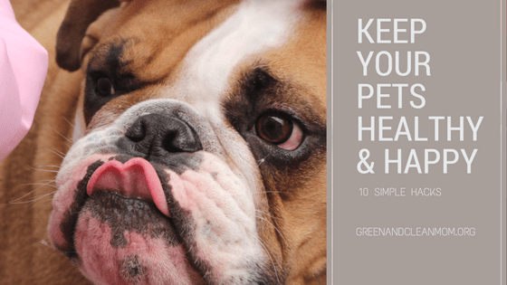 10 Simple Hacks to Keep Your Pets Healthy and Happy
