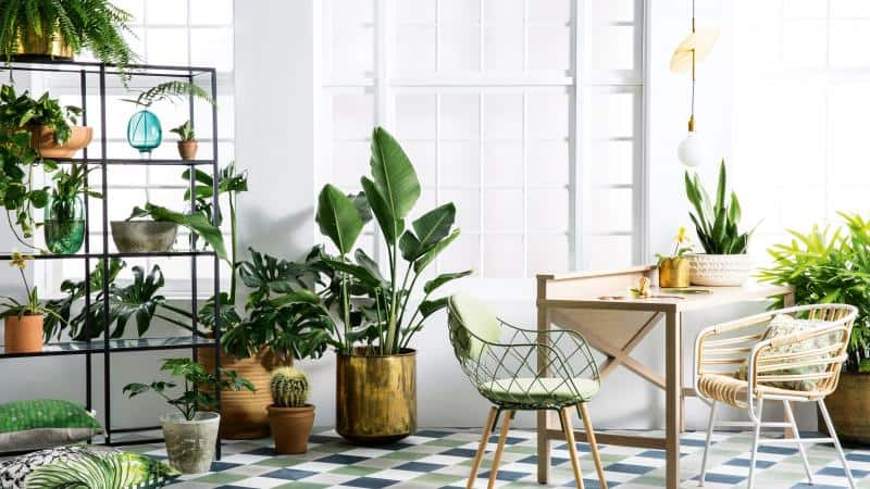 Year Of The House Plants Interior Design Trends Online