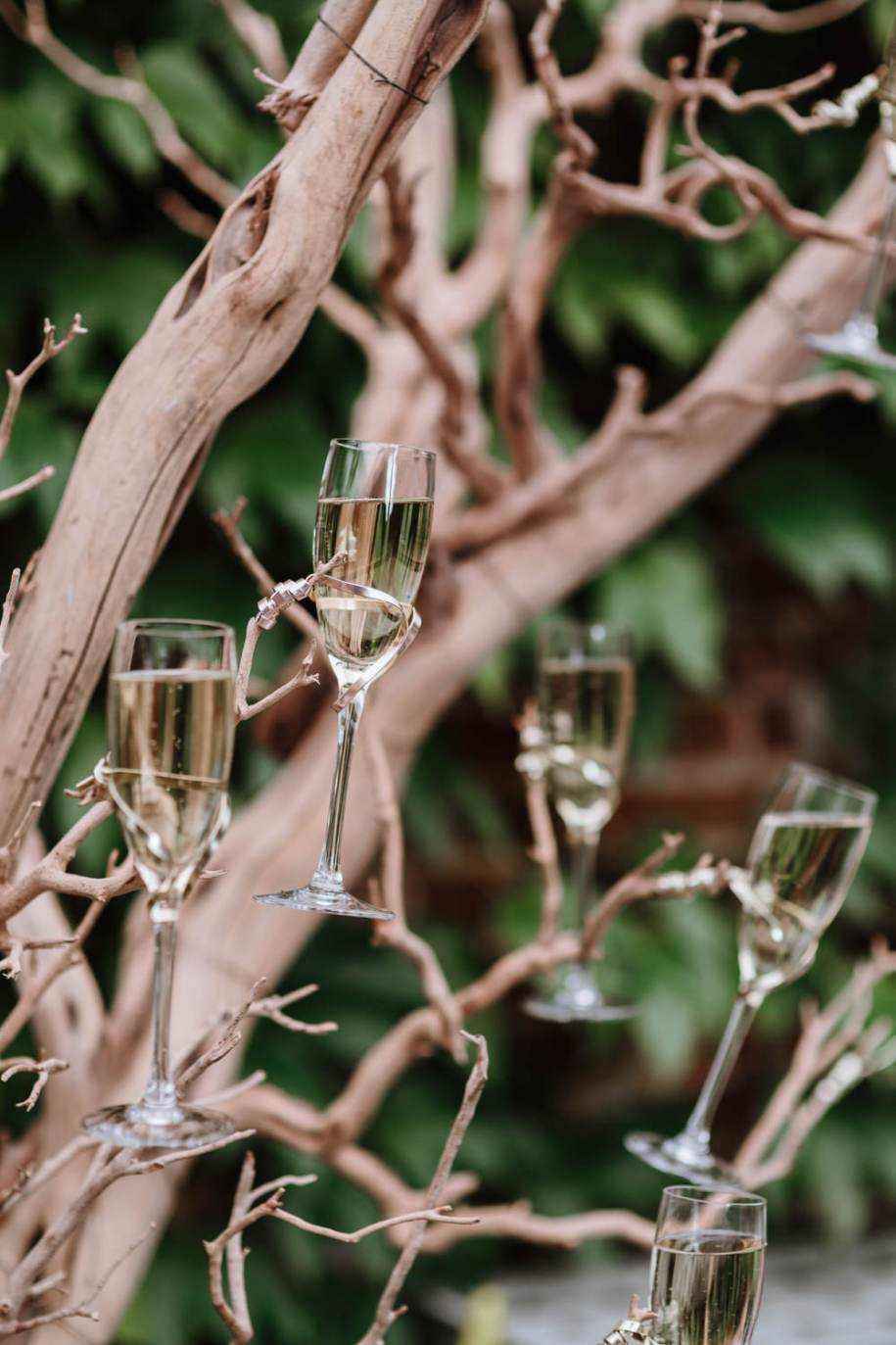 champagne glasses in a tree for wedding canapes