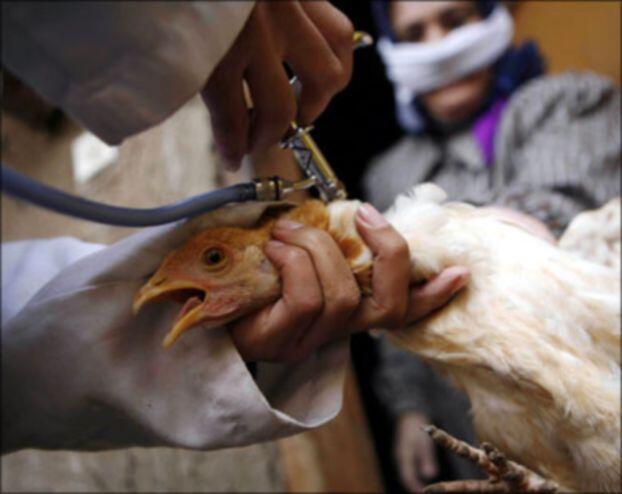"""إيطاليا تبلغ عن رصد أنفلونزا الطيور """"إتش 5 إن 8"""" في مزرعة"""