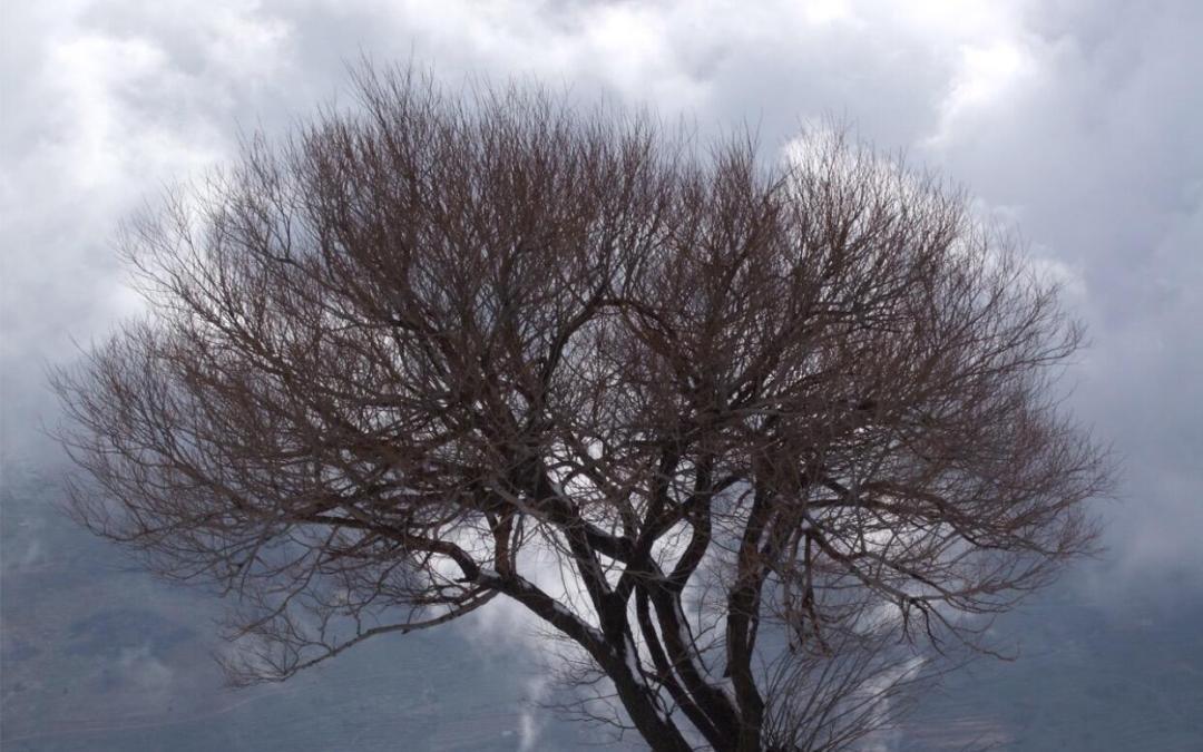 GreenArea.me ينفرد بنشر أحدث تقرير حول توقعات تغير المناخ في لبنان