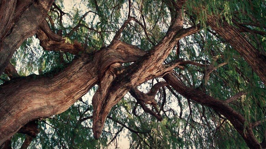 Les liens entre les arbres sont importants pour maintenir la diversité dans les forêts tropicales