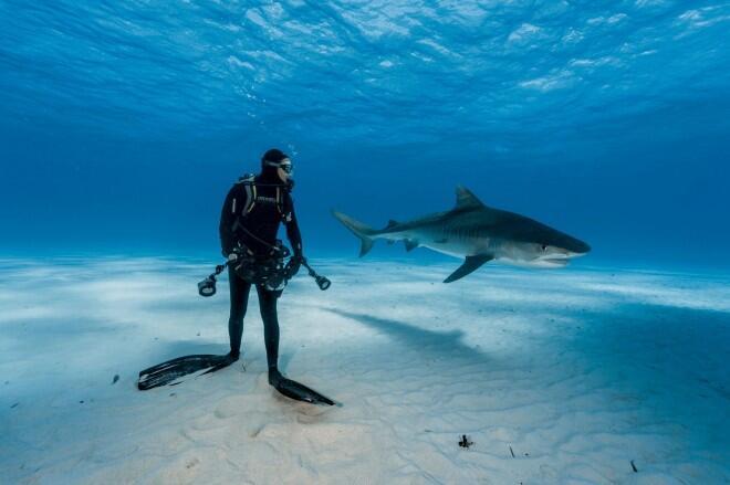 National Geographic selecciona sus fotografías más increíbles de este año