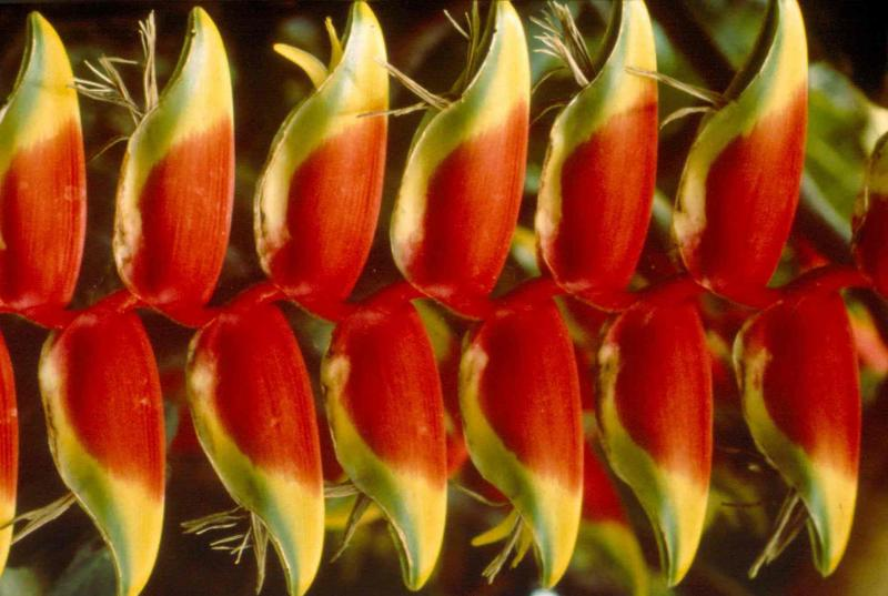 UNAM Give Away endangered plants for Christmas
