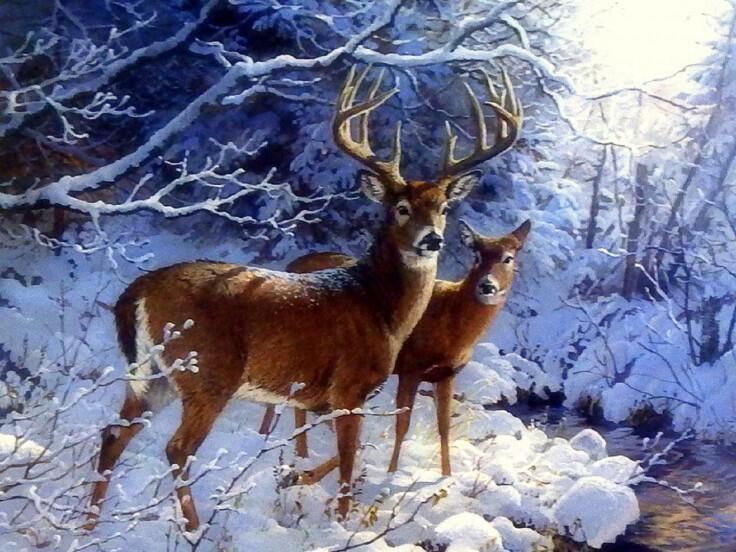 Deer creekside whitetail deer xmas new year paintings christmas deer creekside whitetail deer xmas new year paintings voltagebd Images