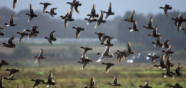 اصطياد الطيور قرب المنازل عمل لا أخلاقي ومخالف للقانون!