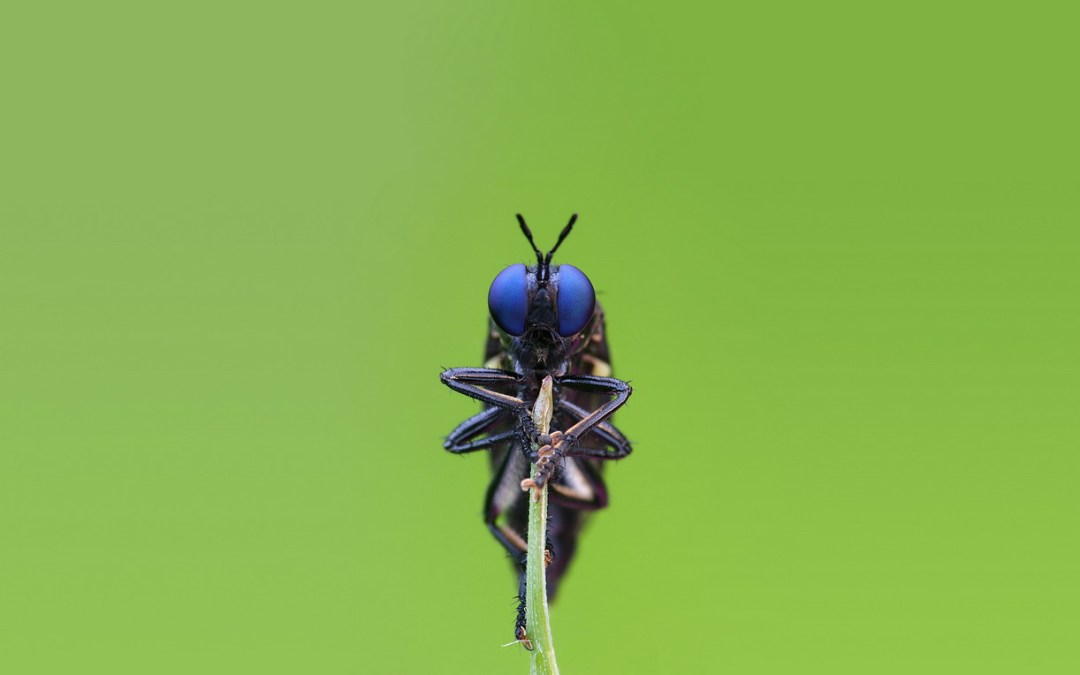 أزمة انقراض الحشرات تتفاقم… وبيانات مثيرة للقلق