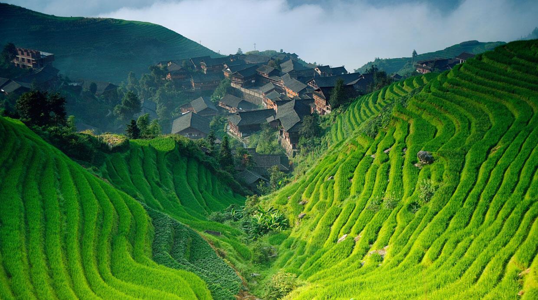 El cultivo de arroz..otra victima del cambio climatico