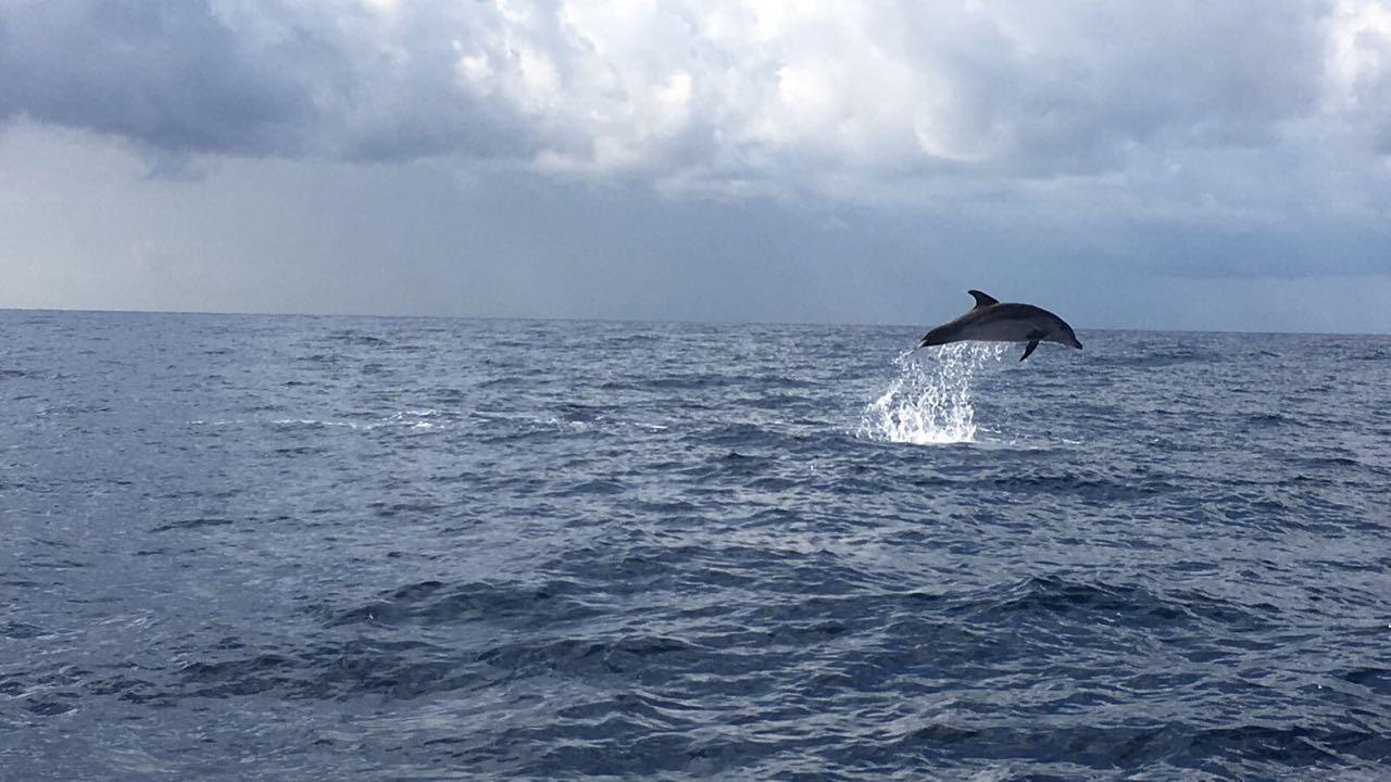 الدلافين من أجمل الكائنات الاجتماعية الموجودة في بحر لبنان