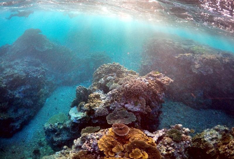 علماء يختبرون سبلا للحد من تأثير تغير المناخ على 50 من الشعاب المرجانية