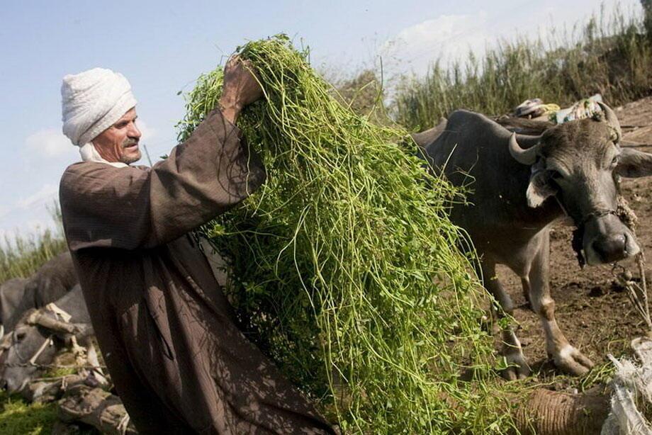 الجوع في الشرق الأدنى وشمال أفريقيا يهدد أكثر من 30 مليون شخص