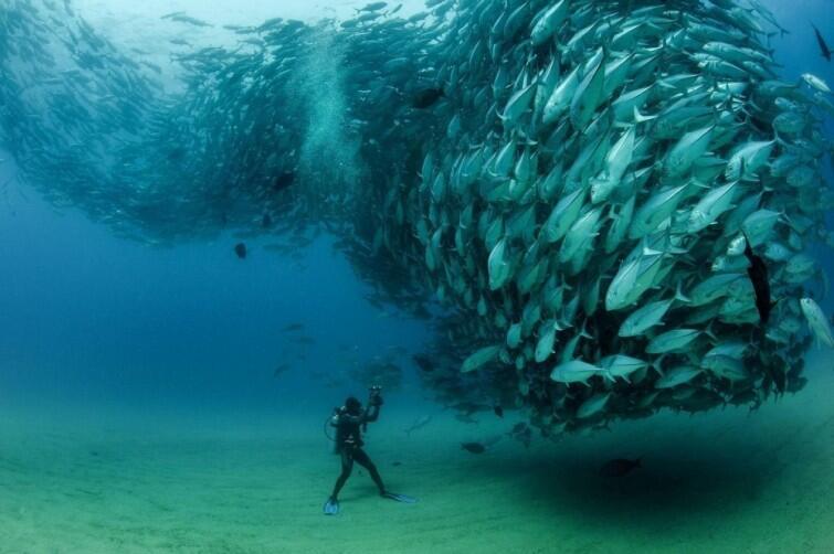 impresionantes imágenes del reino animal