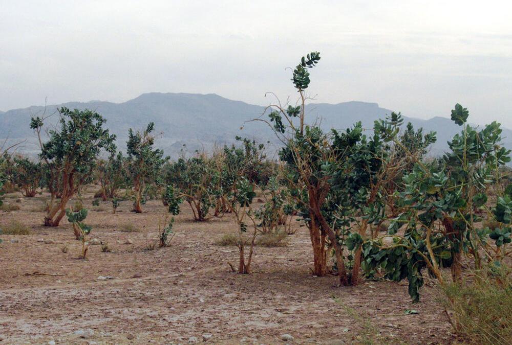 """إعلان محمية """"فيفا"""" في الأردن أكثر مواقع """"رامسار"""" انخفاضًا"""
