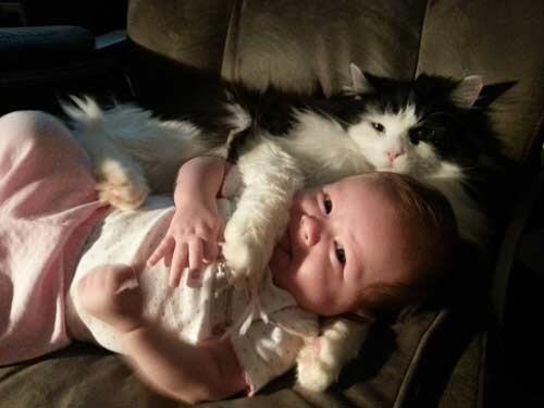 فوائد تربية القطط في المنزل