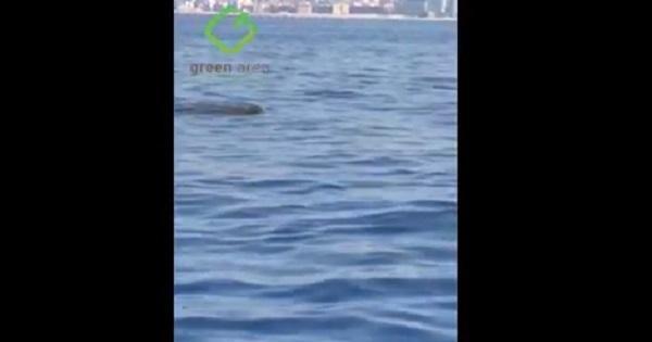 حيتان في بحر بيروت