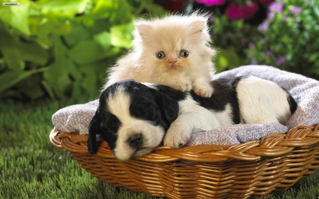 إكتشف شخصيتك مع القطط أم الكلاب