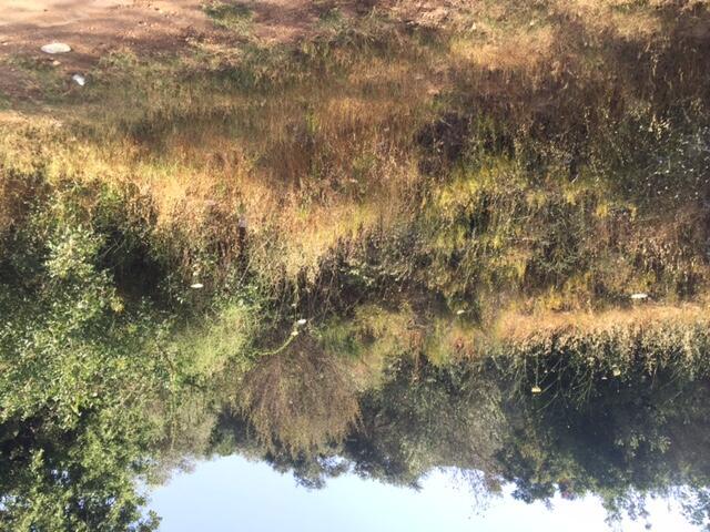 كثافة الأعشاب البرية اليابسة تنذر بحرائق في المنطقة الحدودية