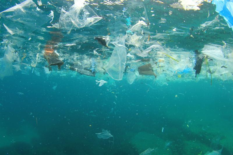 رائحة البلاستيك في البحار .. طُعم للأسماك والبشر