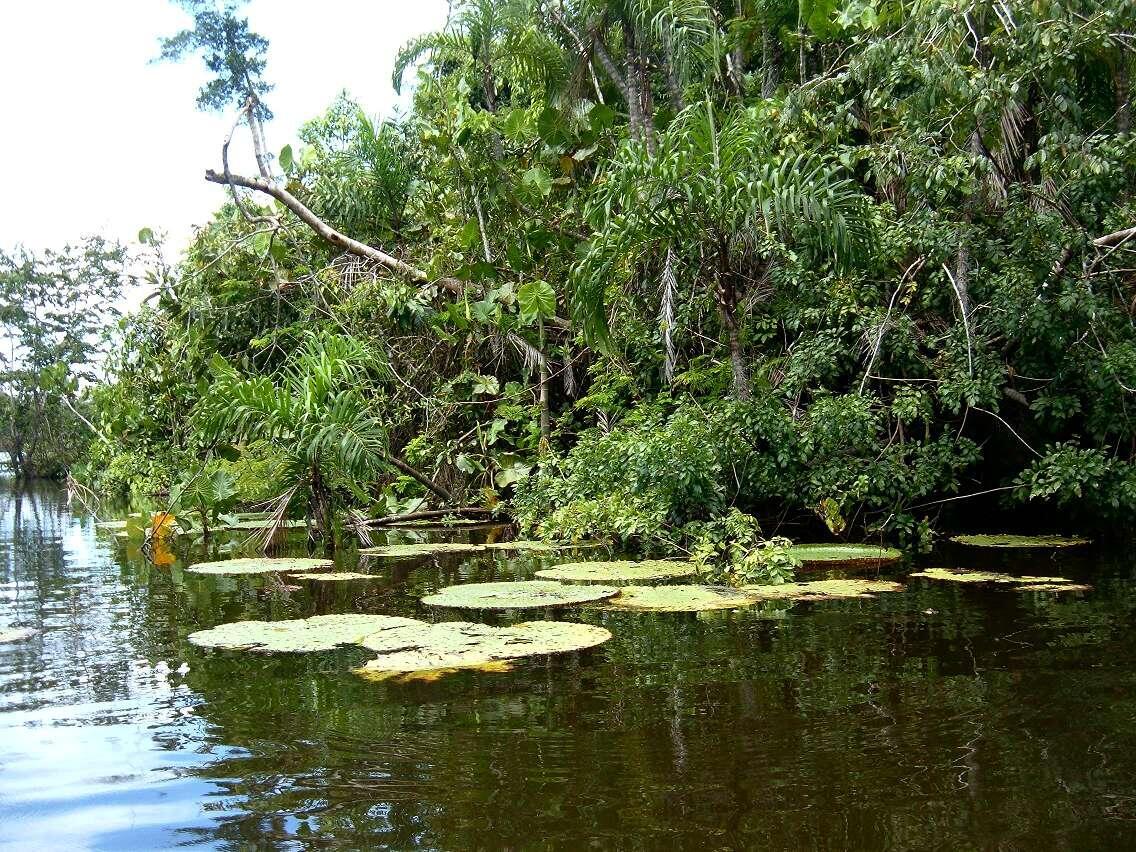Hay mas que 14000 especies de plantas en el Amazonas!!!!