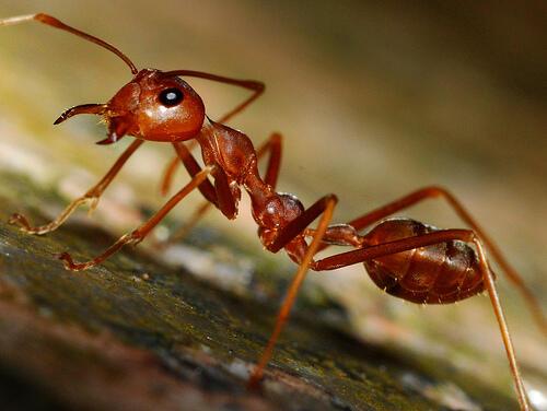 النملة لا تقلب إلّا على جنبها الأيمن فقط