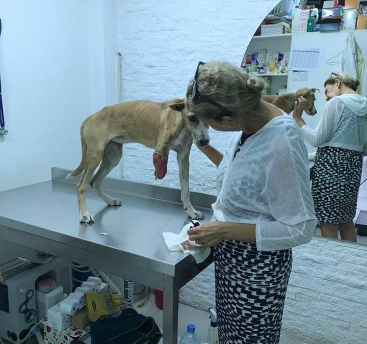 إنقاذ كلب… من حاوية النفايات إلى عيادة الطبيب البيطري