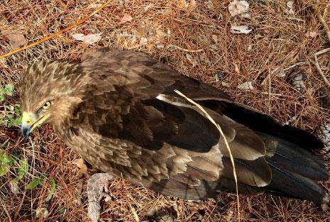 هل ما كُتب للطيور قد كُتب؟