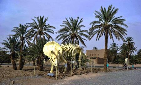 أشجار النخيل  في المغرب..ثروة طبيعية هامة