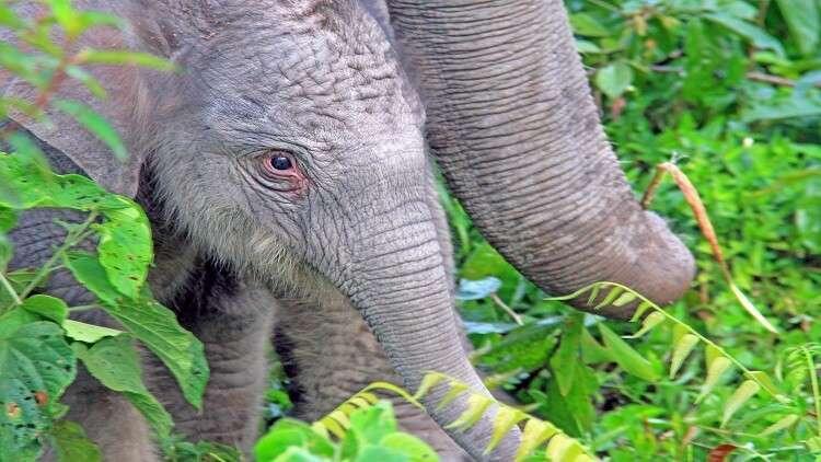 """تطوير حبوب منع حمل للرجال من """"سم الفيلة""""!"""