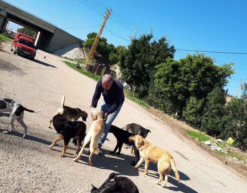 ظاهرة الكلاب الشاردة قابلة للحل… بلدية جون نموذجا
