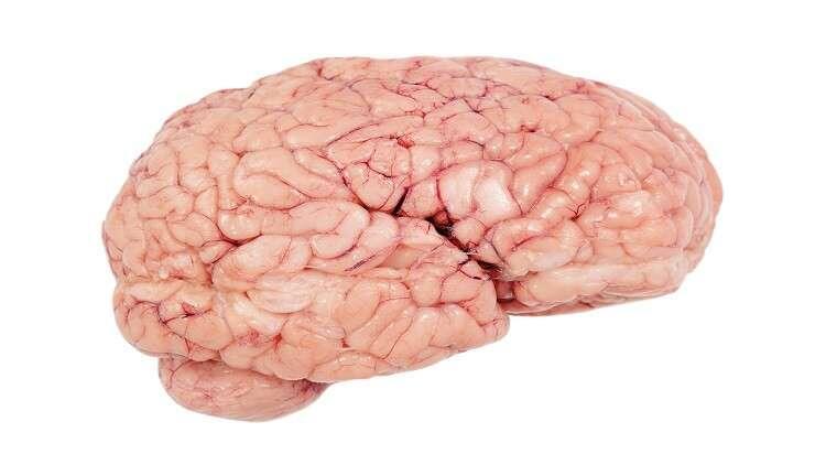 """عادات """"قاتلة"""" تدمر خلايا الدماغ"""