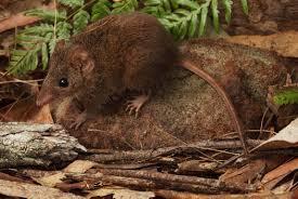 فئران .. تمارس الجنس حتى الموت!