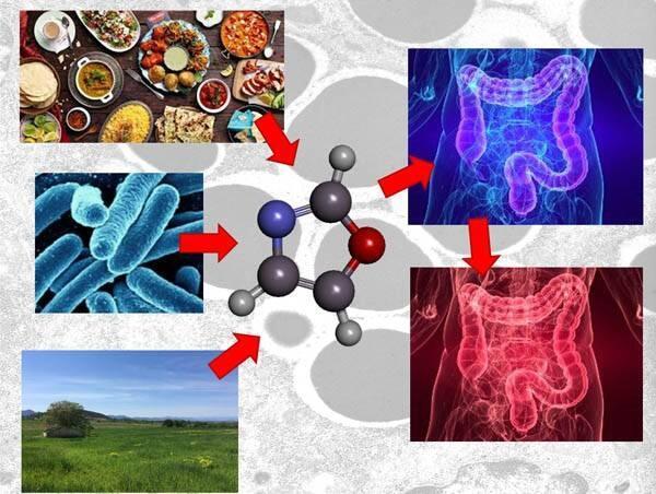 Identifican compuestos químicos como posibles inductores de enfermedades inflamatorias intestinales