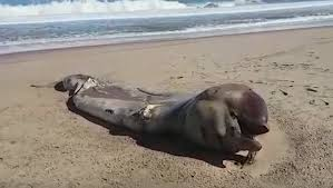 … كائن بحري غامض يثير حيرة العلماء!