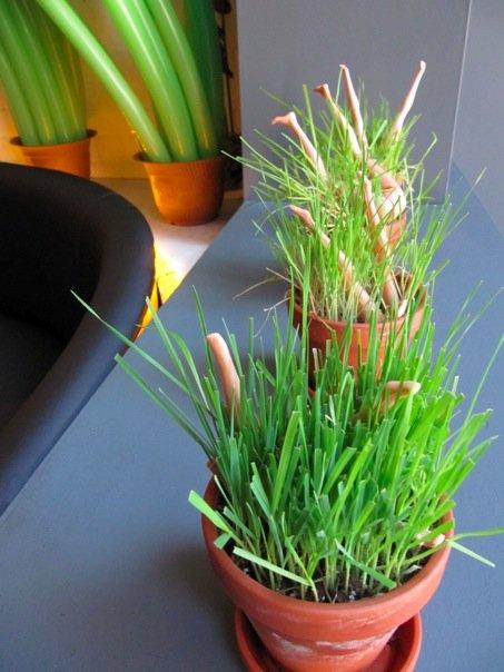 Grass Pots