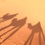 ラクダに乗ってサハラ砂漠へ