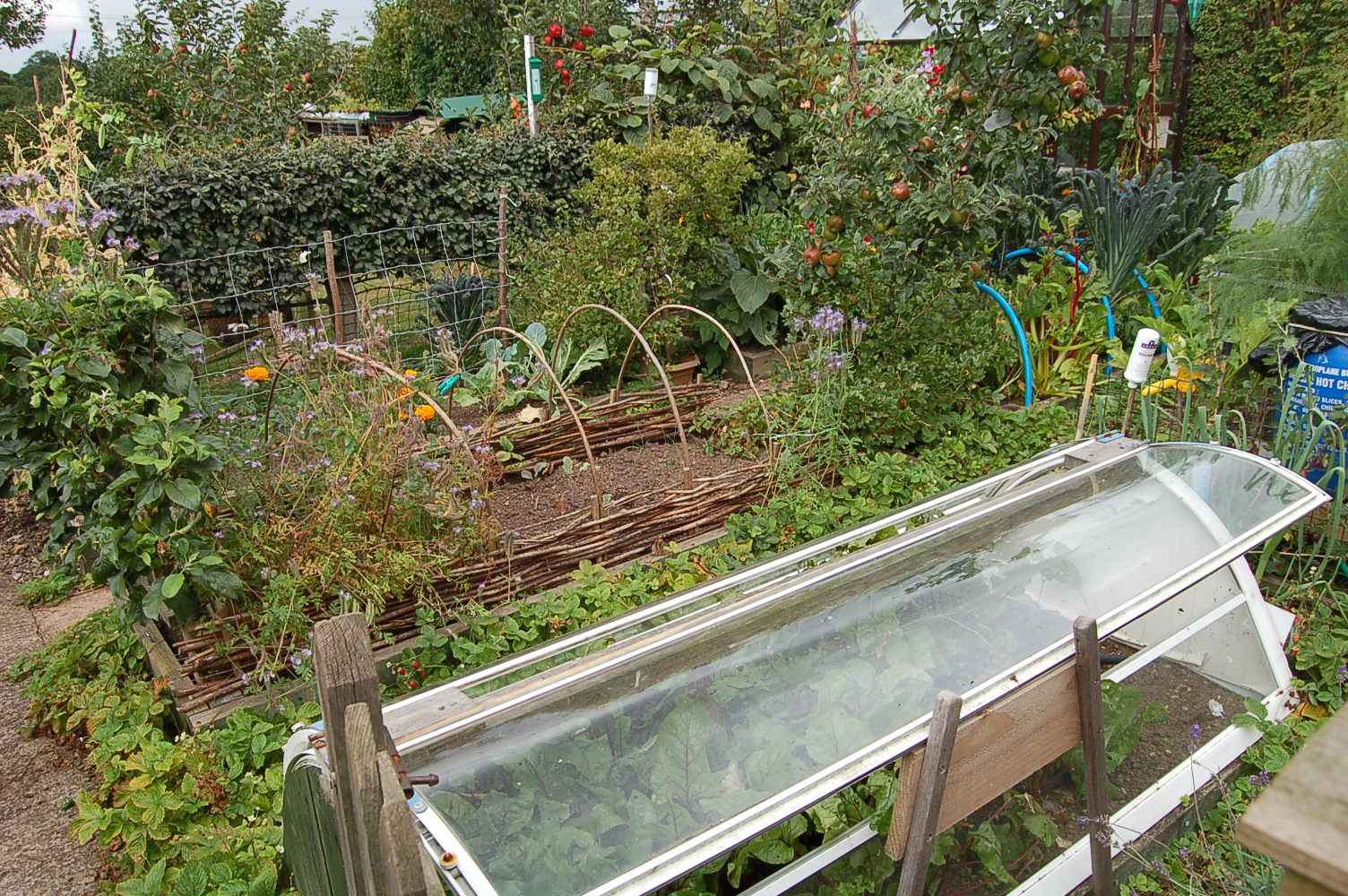 Permaculture Garden | greenbenchramblings on Backyard Permaculture Design id=14509