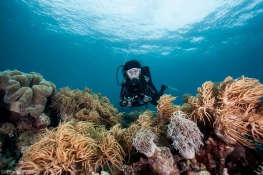 Moalboal reeftop