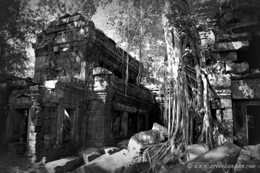 Ta Prohm ~ On Tour with www.greenbyname.com