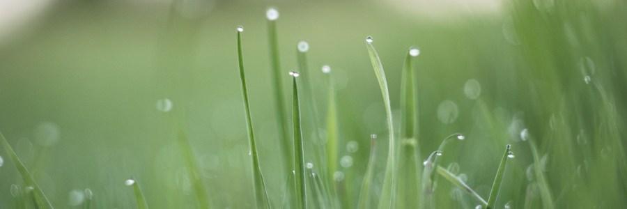 Rain Healthy Turf and Agronomy
