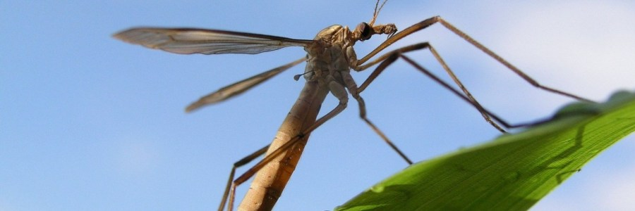 Cranefly sightings Syngenta Pest Tracker