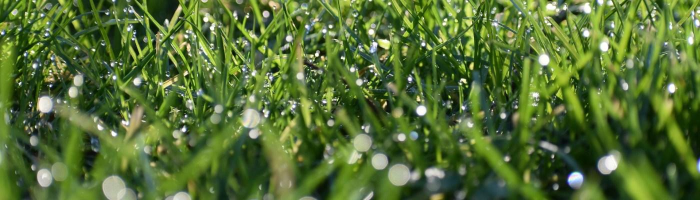 Grass Turf Management Golf Course